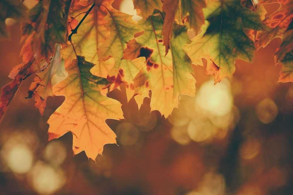 jesen web